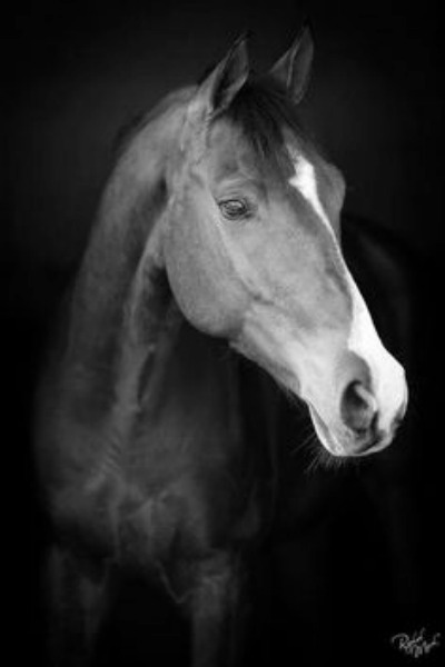 profile horse black and white